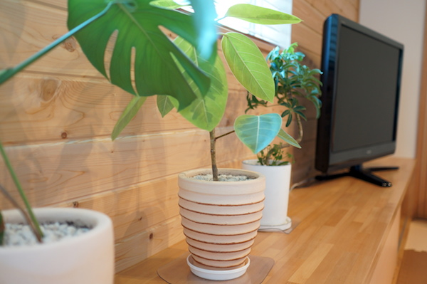 観葉植物インテリア3