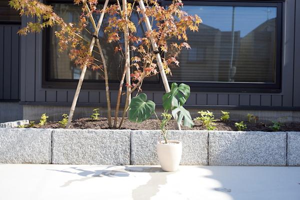 観葉植物インテリア太陽