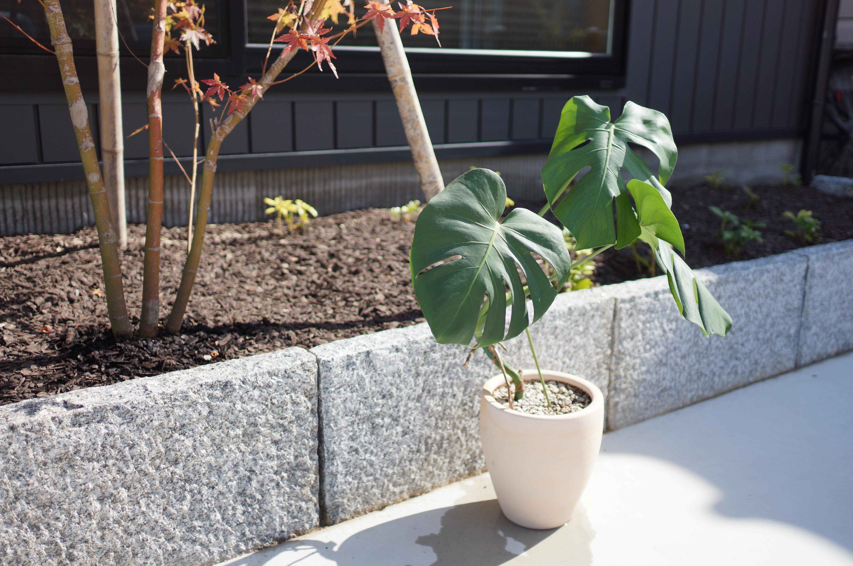観葉植物インテリア水やり