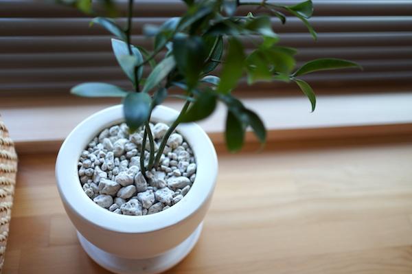 観葉植物インテリア5