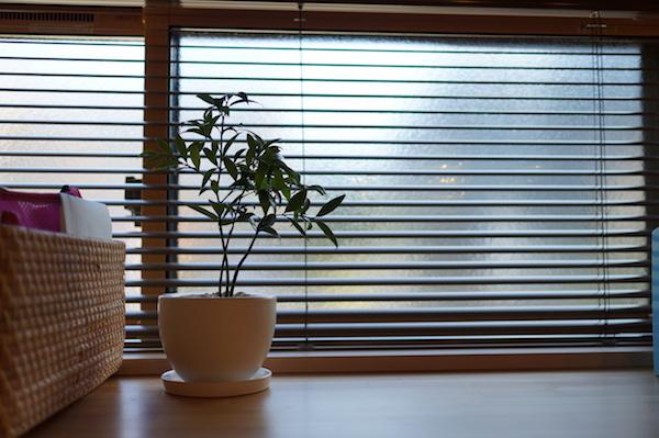 観葉植物インテリアキッチン
