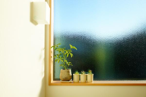 観葉植物インテリア