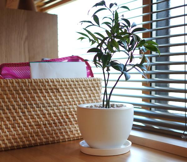 観葉植物を各部屋のインテリアに。人気のあるおすすめグリーン。
