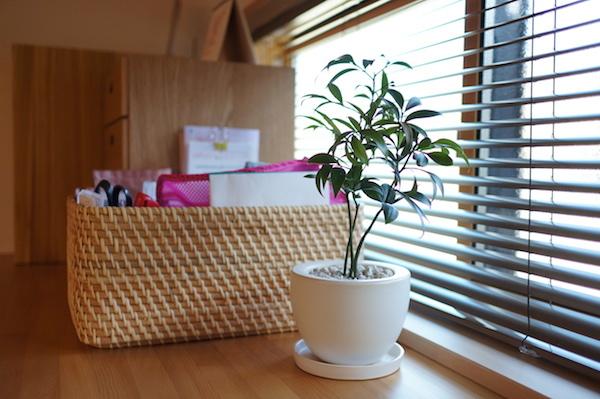 観葉植物インテリアナギ
