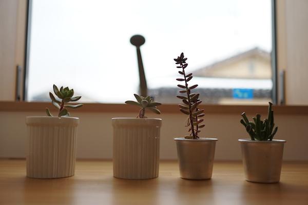 同じく子供部屋の多肉植物