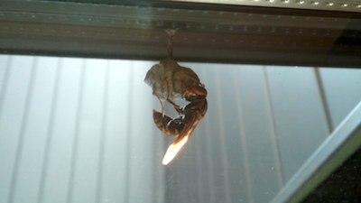 テラスのハチ