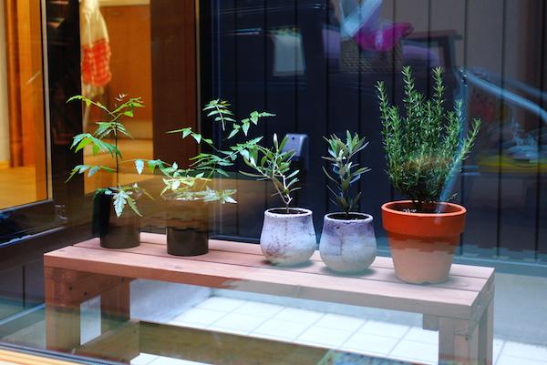 テラスに観葉植物