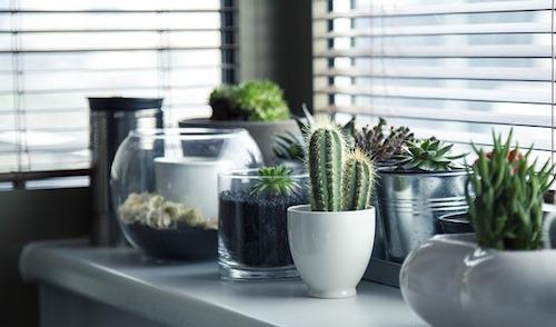 寝室に置くと良い観葉植物のオススメは?カビや風水についても