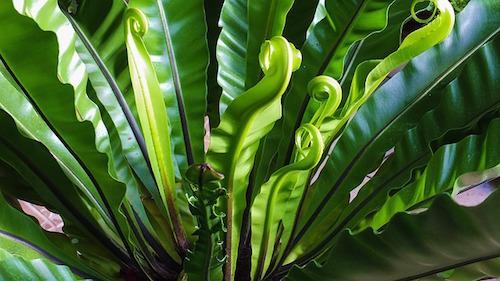 オススメ観葉植物