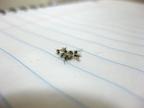 家に出る虫を一覧にまとめたら気持ち悪い!黒い虫が多い?