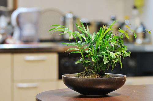 玄関に置きたい観葉植物おすすめはコレ!置き方で枯れる?造花でもOK?