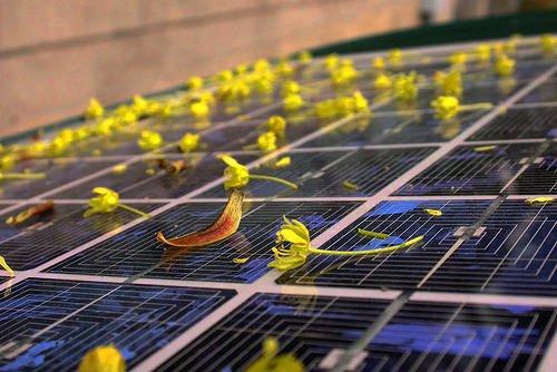 太陽光発電 メリット&デメリット!その価格で欠点補える?問題点と課題