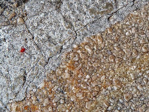 ベランダの小さい赤い虫の駆除方法!布団が干せない時の対策とは。