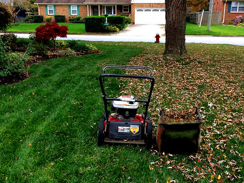 芝生の手入れは雑草が大変!!3月がポイント?年間の管理と育て方