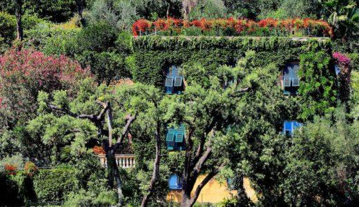 庭木の目隠しには花が咲く常緑低木がオススメな理由